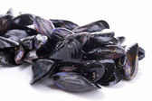 Isolated mussels — Stock Photo