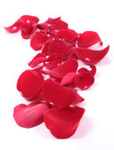 Red petal — Stock Photo