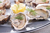 Oyster platter — Stock Photo