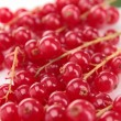 Fresh red currant — Stock Photo #21008447