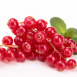 Fresh red currant — Stock Photo #21008495
