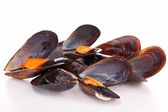 Isolated heap of mussel — Stock Photo