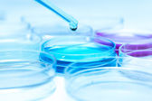 Pipette with drop of color liquid and petri dishes — Stock Photo