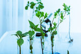 Experimenting with flora in laboratory. — Stock Photo
