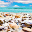 Sea Shells on the beach — Stock Photo