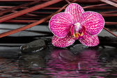 Orchid and black stones — Stock Photo