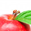 Ladybird on red apple and green leaf — Stock Photo