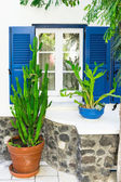 Facade of the house with plants Santorini Greece — Stock Photo