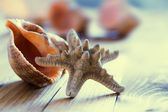 Close-up of starfish seashell on old wooden board — Foto Stock