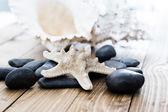 Close-up di conchiglie stelle marine su tavola di legno vecchio — Foto Stock
