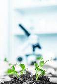 Genetically modified plant tested in petri dish . — 图库照片
