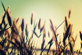 Wild grasses and weeds in a meadow . — Stock Photo