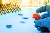 Meat cultured in laboratory conditions from stem cells — Stock Photo