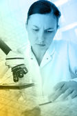Laboratory assistant in the laboratory — Stock Photo
