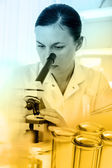 Laboratory assistant analyzing a sample — Stock Photo