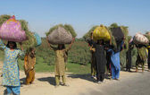 Women carry fodder for animals, on their heads pass through Hyderabad-Tando Jam Road — Stock Photo