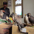 Stock Photo: Sindh Wild Life Department official shows Eagles, who were being smuggled from DerIsmail Khto Karachi, during press conference