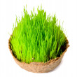 Fresh green grass in the small basket isolated - Stock Photo