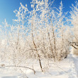 Winter landscape with snow covered trees against blue sky - Stock Photo