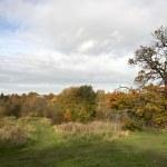 Autumn park — Stock Photo