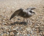 A sea gull on the beach — Stock Photo