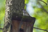 Sparrow on in a birdhouse — Stock Photo
