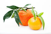 Mandarin. tangerines with leaves — 图库照片
