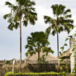 Tropical palm trees — Stockfoto