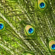 Peacock feathers closeup — Stockfoto #18805347