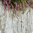 Stock Photo: Heather on old wood