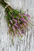 Bouquet of heather — Stock Photo