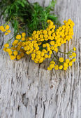 Tansy on the wooden background — Stock Photo