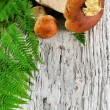 Autumn background: mushroom and fern — Stock Photo