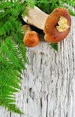 Autumn background: mushroom and fern — Stock Photo