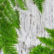 Fern leaves on the old wood — Stock Photo