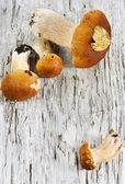 Mushrooms on the old wood — Stock Photo