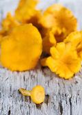 Chanterelle mushrooms — Stock Photo