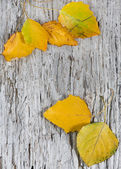 Autumn leaves on the old wood background — Stock Photo