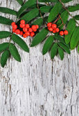 Red rowan berries on the old wood — Stock Photo