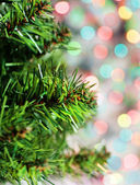 Branch of fir tree on the shiny background — Stock Photo