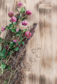 Clover on the wooden background — Stock Photo
