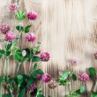 Stock Photo: Clover on wooden background
