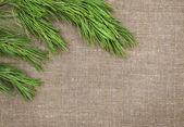 Christmas decoration with fir branch on burlap — Fotografia Stock