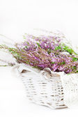 Heather in the basket — Stock Photo