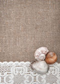 Seashells on lacy cloth and burlap — 图库照片