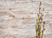 Easter decoration with catkins on old wood — Stockfoto
