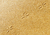 Bird traces on the sand — Stock Photo