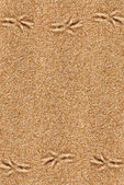 Sand background with bird traces  — Stock Photo