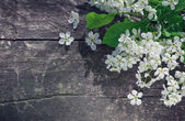 White spring flowers on the old wood — Foto de Stock