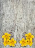 желтые цветы на старой древесины — Стоковое фото